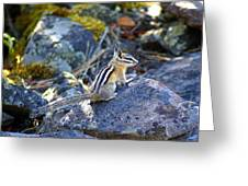 Chipmunk On The Rocks Greeting Card