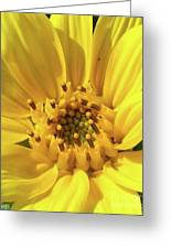 Chipmunk Planting - Sunflower Greeting Card