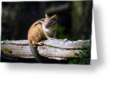 Chipmunk Portrait Greeting Card
