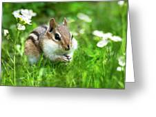 Chipmunk Saving Seeds Greeting Card