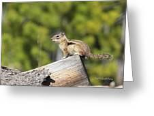 Chipmunk Sunning Greeting Card