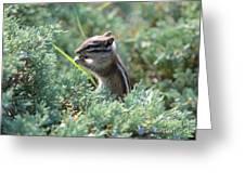 Chipmunk With Bokeh Greeting Card