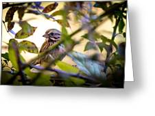 Chipping Sparrow In The Brush Greeting Card
