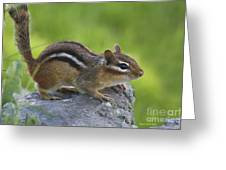 Chippy On The Move Greeting Card