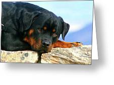 Chiron The Rottweiler  Greeting Card
