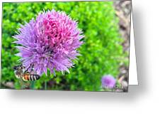 Chive And Bee Greeting Card