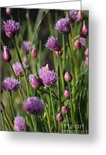 Chive Flowers Greeting Card