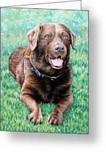 Choco Labrador Greeting Card