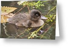 Chocolate Duckling Greeting Card