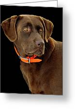 Chocolate Lab Greeting Card by William Jobes