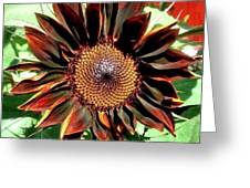 Chocolate Sunflower Greeting Card