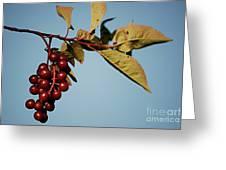 Choke Cherry Greeting Card