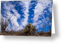 Cholla Blue Sky Greeting Card