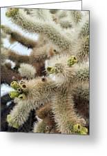 Cholla Cactus Garden Closeup Greeting Card