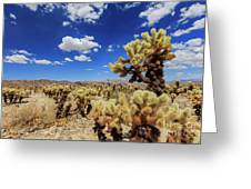 Cholla Cactus Garden In Joshua Tree National Park Greeting Card