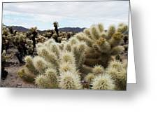 Cholla Cactus Garden Landscape Greeting Card