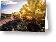 Cholla Cactus Greeting Card