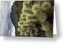 Cholla Cactus Greeting Card