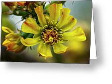 Cholla Flower H1848 Greeting Card