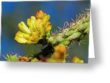 Cholla Flower H40 Greeting Card
