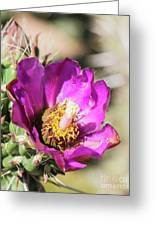 Cholla Flower Greeting Card