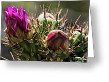 Cholla With Wasp Greeting Card