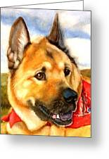 Chow Shepherd Mix Greeting Card