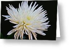 Chrisanthium On Black 2 Greeting Card