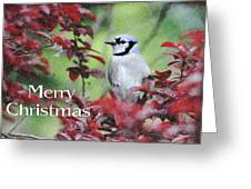 Christmas And Blue Jay Greeting Card