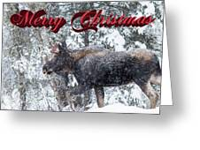 Christmas Bull Moose Greeting Card