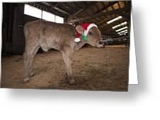 Christmas Calve Of Honor Greeting Card
