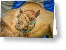 Christmas Camel On Call Greeting Card