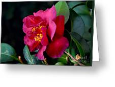 Christmas Camellia Greeting Card