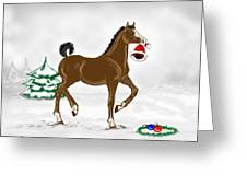 Christmas Colt Greeting Card