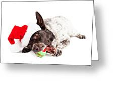 Christmas Dog Chewing On Tennis Ball Greeting Card