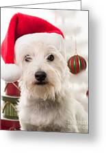 Christmas Elf Dog Greeting Card