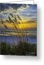 Christmas In St Augustine Fl  Greeting Card