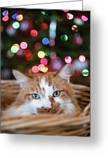 Christmas Kitty In A Basket Greeting Card