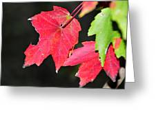 Christmas Leafs Greeting Card