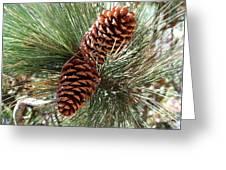 Christmas Pine Cones Greeting Card