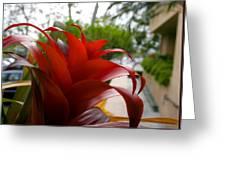 Christmas Plant Greeting Card