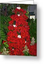 Christmas Poinsettia Display 002 Greeting Card