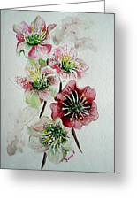 Christmas Rose Greeting Card