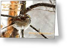 Christmas Sparrow - Christmas Card Greeting Card