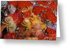 Christmas Tree Worms, Bonaire Greeting Card