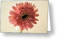 Chrysanthemum #029 Greeting Card