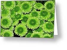 Chrysanthemum Green Button Pompon Kermit Greeting Card