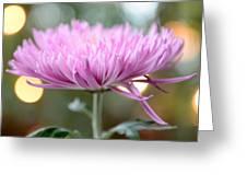 Chrysanthemum Happiness Greeting Card