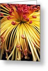 Chrysanthemum Morning Greeting Card