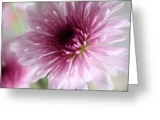 Chrysanthemum #001 Greeting Card